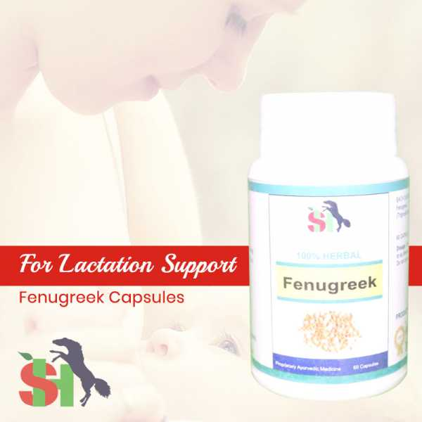 Buy Fenugreek Capsules - Lactation Support Online in South Africa